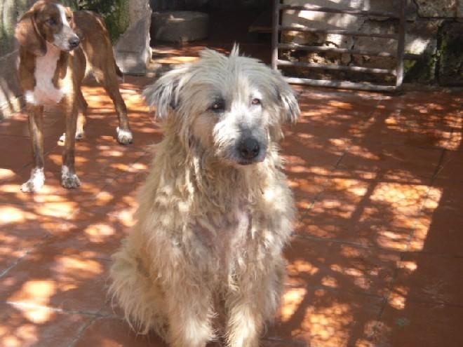 Die vergessenen Hunde von Stroncone Mela%20-exrieti%20(1)